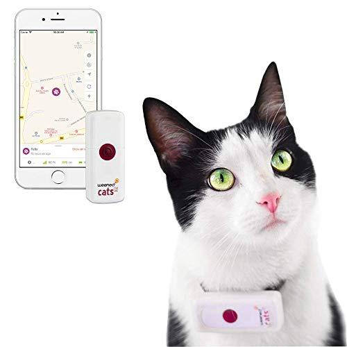 Weenect Cats 2 - El collar GPS para...