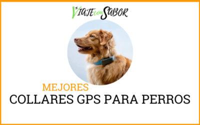 Collar GPS para perros: Comparativas y Análisis